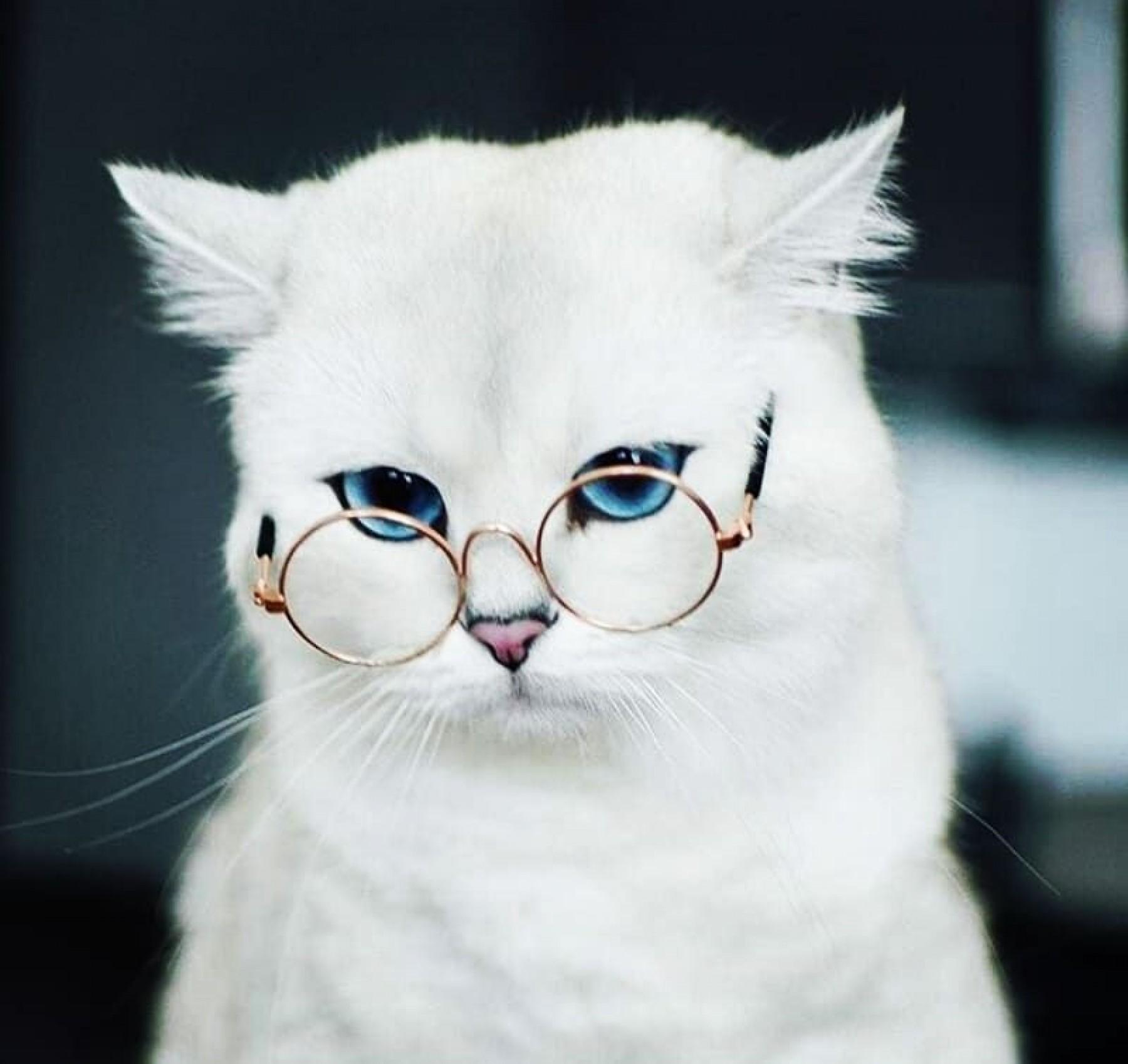 kedi olmuş gidiyorsun kapak fotoğrafı