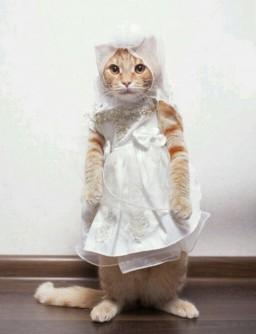 kedi olmuş gidiyorsun profil fotoğrafı