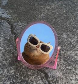 tardisinkirikcami profil fotoğrafı